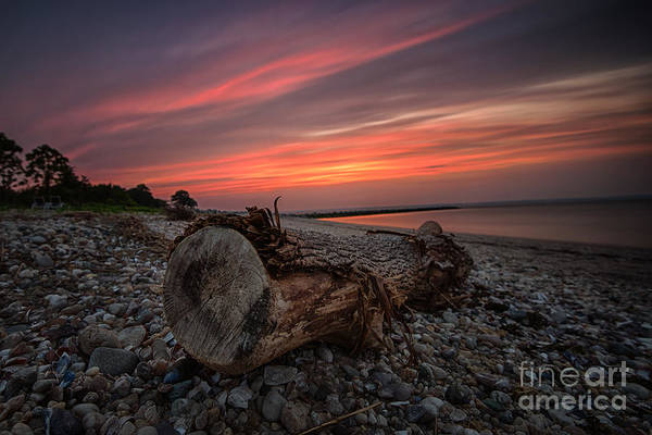 Photograph - Sunset Log by Alissa Beth Photography