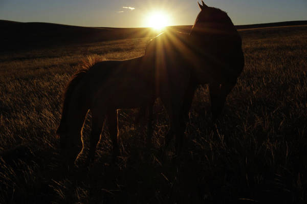 Photograph - Sunset Love by Amanda Smith