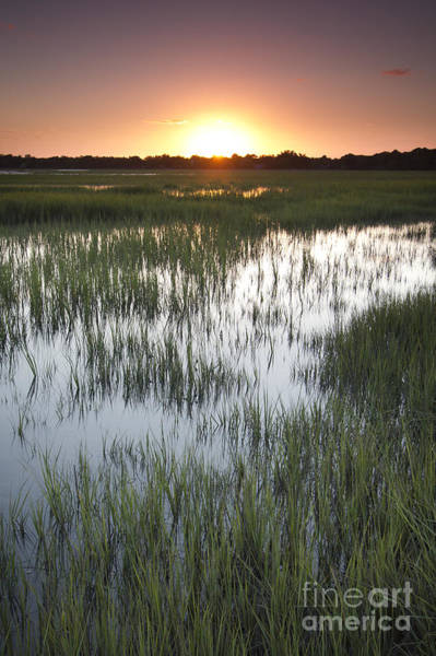 Marshes Photograph - Sunset Marsh Grass by Dustin K Ryan
