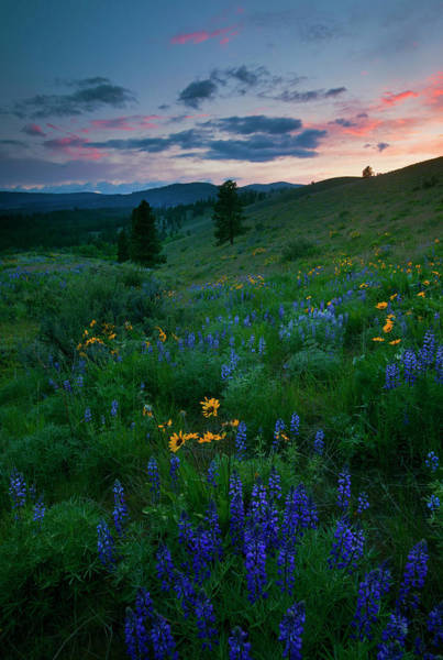 Hillside Photograph - Sunset Meadow Trail by Mike  Dawson