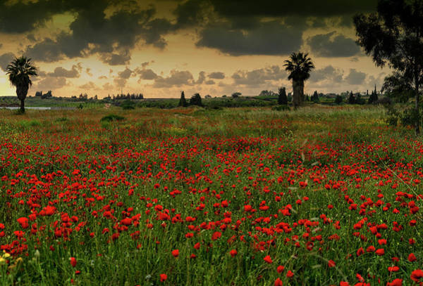 Photograph - Sunset On A Poppies Field by Uri Baruch