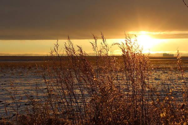 Christy Photograph - Sunset On Field by Christy Patino