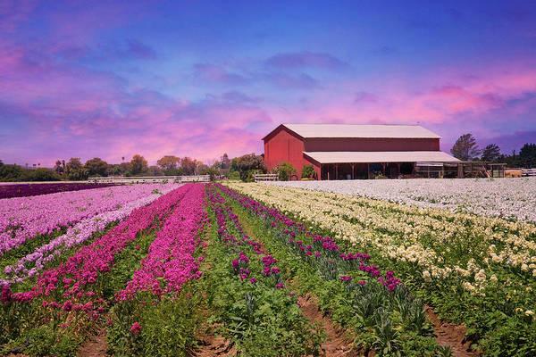 Photograph - Sunset On The Flower Field by Lynn Bauer