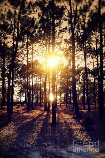 Pine Grove Photograph - Sunset On Trees by Carlos Caetano