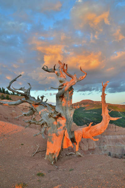 Photograph - Sunset On Twisted Forest by Ray Mathis