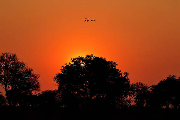 Photograph - Sunset Over Botswana by Kay Brewer