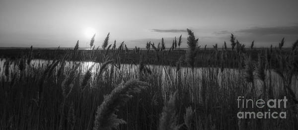 Marshland Photograph - Sunset Over The Marsh Bw by Michael Ver Sprill