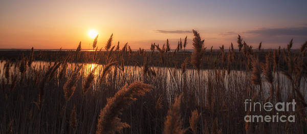 Marshland Photograph - Sunset Over The Marsh by Michael Ver Sprill