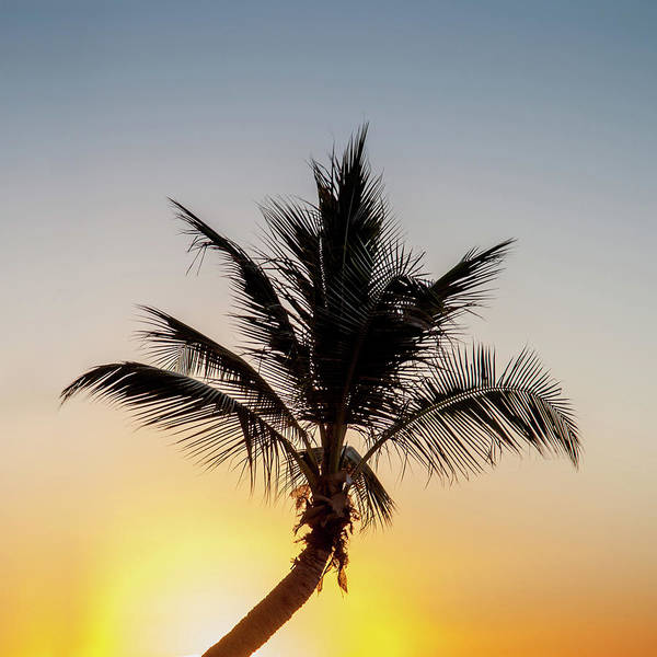 Az Wall Art - Photograph - Sunset Palm by Az Jackson