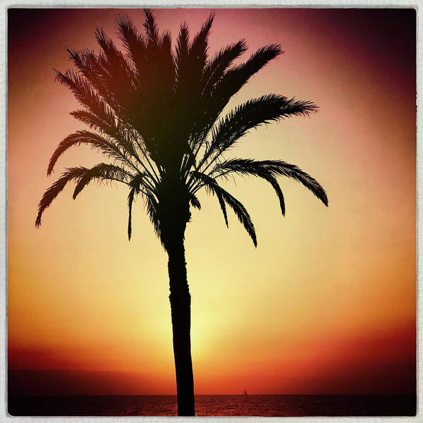 Iphoneography Wall Art - Photograph - Sunset Palm by Dave Bowman