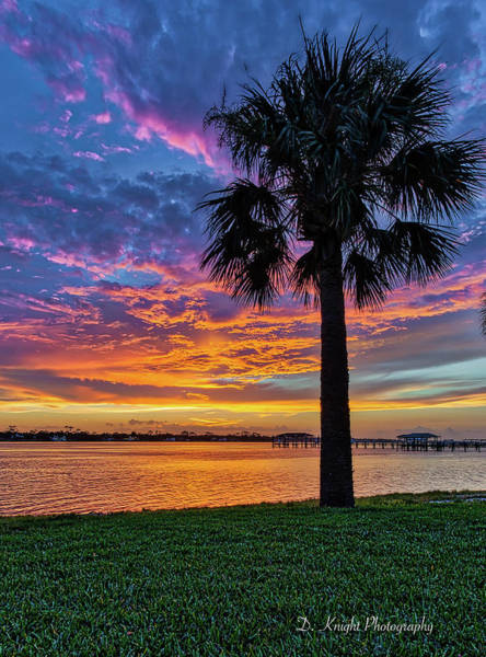 Photograph - Sunset Palm by Dillon Kalkhurst