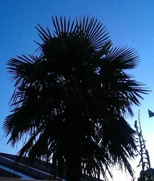 Wall Art - Photograph - Sunset Palm by Nick Blake