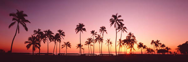 Ocean Grove Photograph - Sunset Palm Trees Oahu Island Hi Usa by Panoramic Images