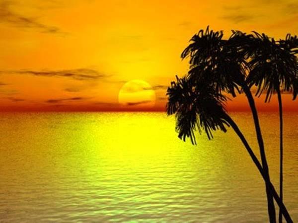 Digital Art - Sunset Palms by Darren Cannell