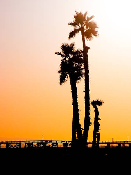 Photograph - Sunset Palms by Jim DeLillo
