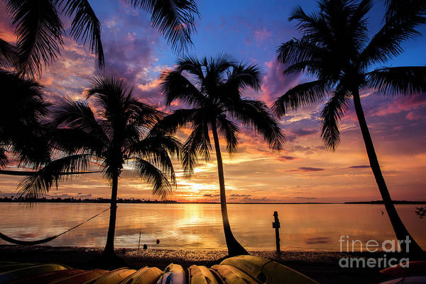 Wall Art - Photograph - Sunset Palms by Jon Neidert