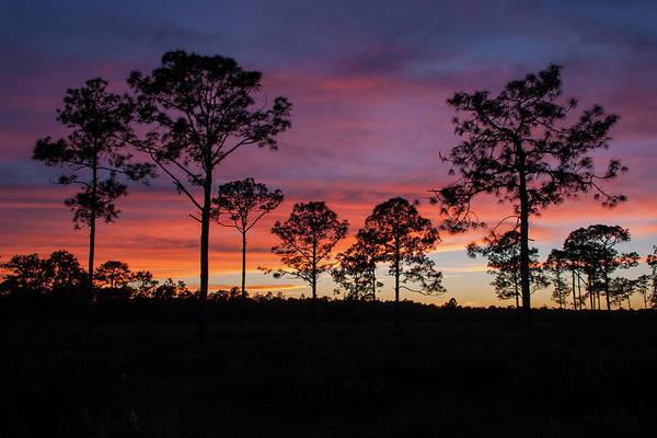 Photograph - Sunset Pines by Paul Rebmann