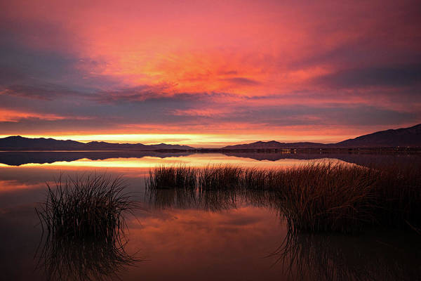 Photograph - Sunset Reeds On Utah Lake by Wesley Aston