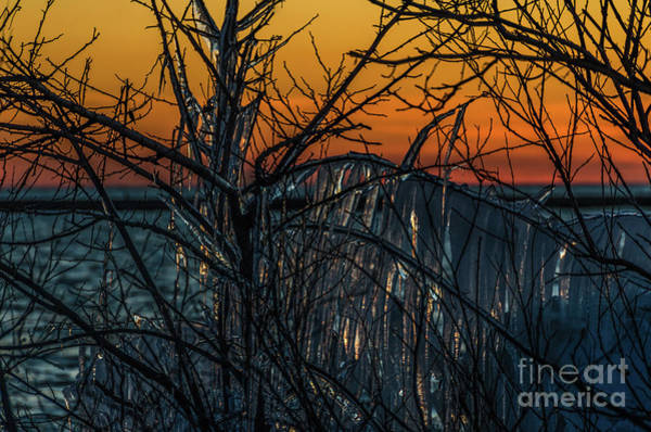 Photograph - Sunset Reflecting Off Ice On Bare Trees by Sue Smith
