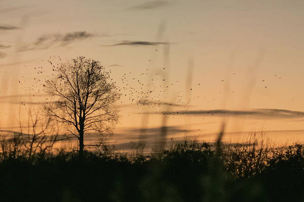 Photograph - Sunset Roost by Wendy Cooper