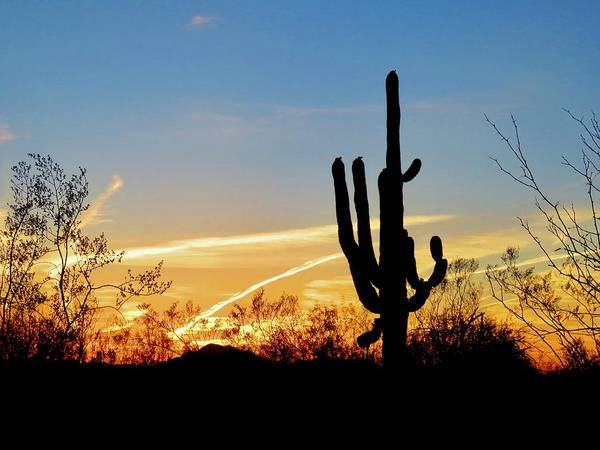 Photograph - Sunset Saguaro In The Spring by Judy Kennedy