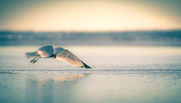 Photograph - Sunset Seagull Takeoffs by T Brian Jones