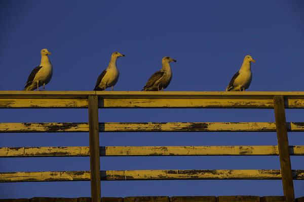 Gull Photograph - Sunset Seagulls by Garry Gay
