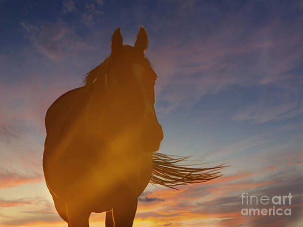 Photograph - Sunset Silhouette by Carol Lynn Coronios