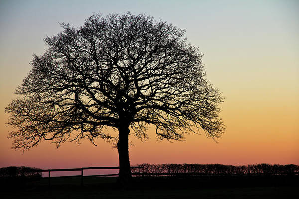 Photograph - Sunset Silhouette by Clare Bambers