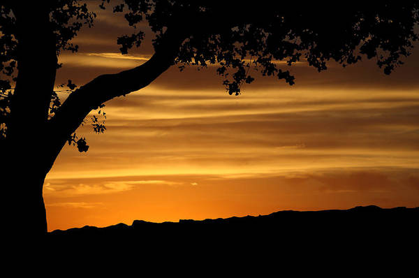 Photograph - Sunset Silhouette by Marie Leslie