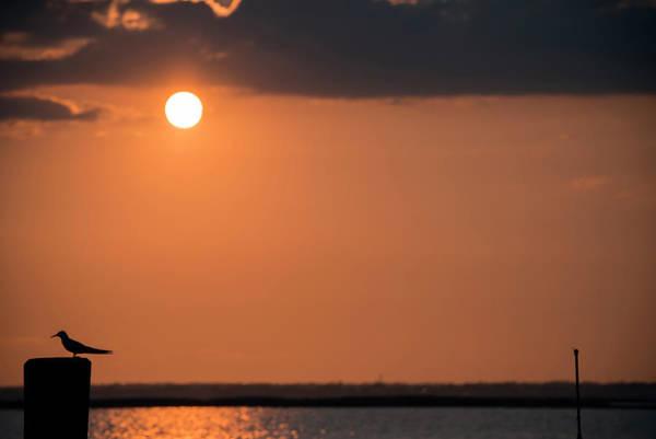 Wall Art - Photograph - Sunset Silhouette by Ryan Crane