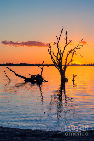 Photograph - Sunset Silhouette  V by Ray Warren