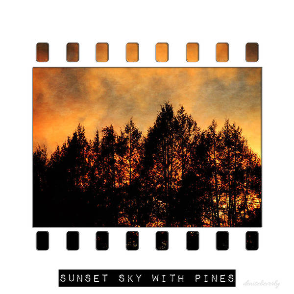Photograph - Sunset Sky With Pines by Denise Beverly