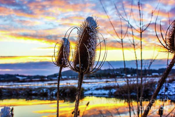 Photograph - Sunset Snow by Michael Cross