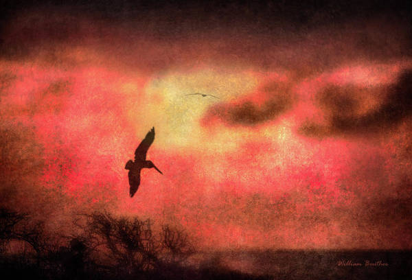 Photograph - Sunset Soaring II by William Beuther