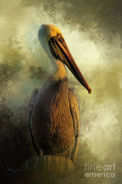 Brown Pelicans Wall Art - Photograph - Sunset Stare by Marvin Spates