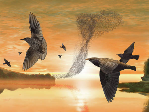 Digital Art - Murmuration by Nigel Follett