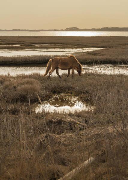 Assateague Island Photograph - Sunset Stroll by Kristopher Schoenleber