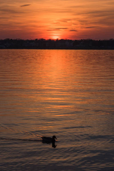 Photograph - Sunset Swim Island Heights New Jersey by Terry DeLuco