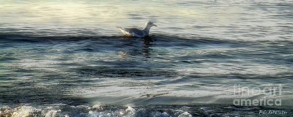 Painting - Sunset Swim by RC DeWinter