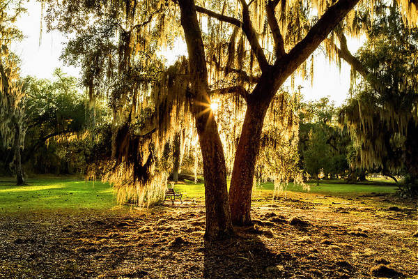 Photograph - Sunset Through The Moss, New Orleans by Kay Brewer