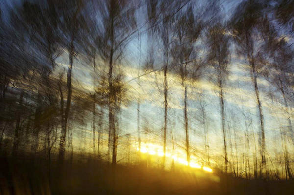 Photograph - Sunset Through The Pines by Gerald Grow