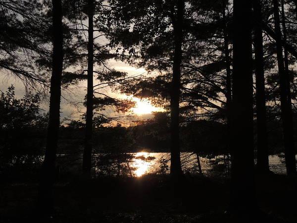 Wall Art - Photograph - Sunset Through The Pines by Teresa Schomig