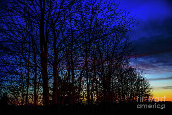 Photograph - Sunset Through The Trees by Alana Ranney