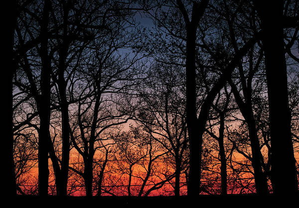 Photograph - Sunset Through The Trees by Mark Dodd