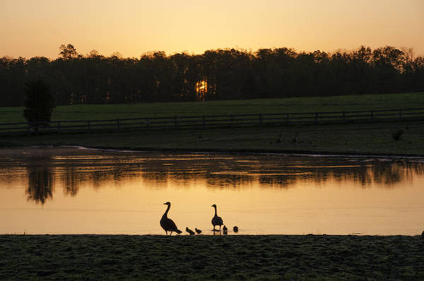Photograph - Sunset Through The Trees On The Duck Pond by Bill Cannon