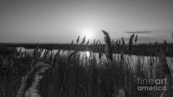 Marsh Grass Photograph - Sunset Through The Wheat Bw by Michael Ver Sprill