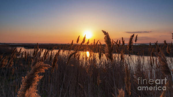 Marshland Photograph - Sunset Through The Wheat  by Michael Ver Sprill