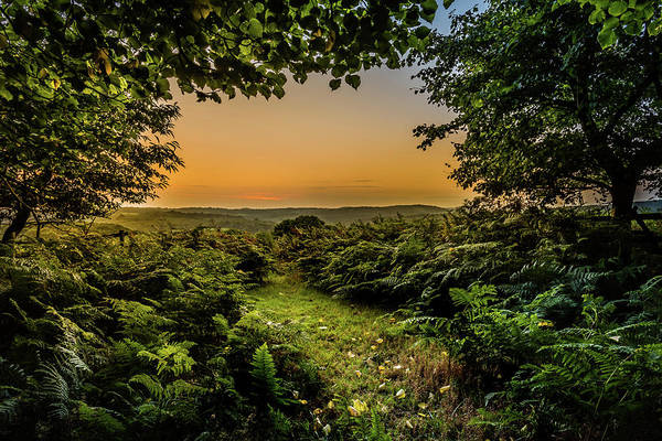 Photograph - Sunset Through Trees by Nick Bywater