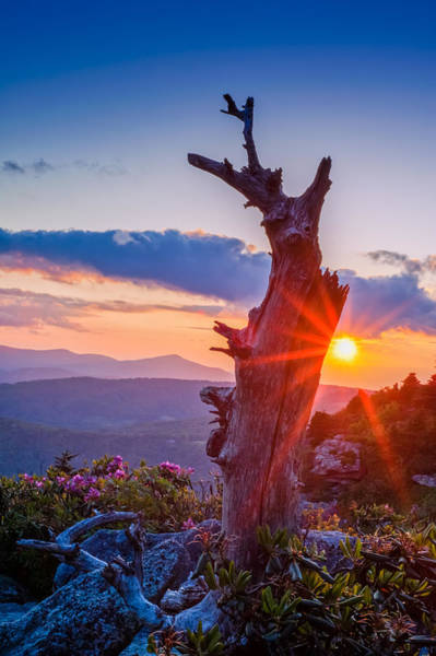 Photograph - Sunset Tree by Joye Ardyn Durham